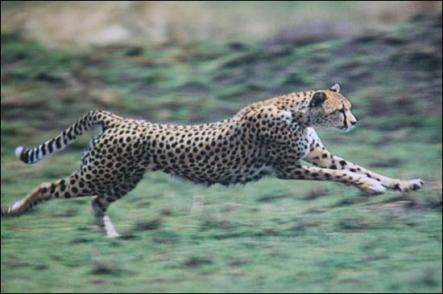 operae-partners-lean-gepard